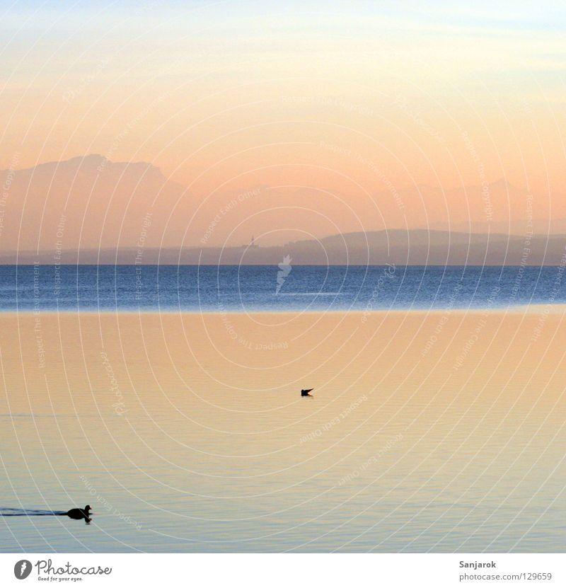Ente auf 11 Uhr! Himmel blau Sonne Sommer Meer Freude Wolken ruhig Berge u. Gebirge See Vogel Zufriedenheit Wellen rosa Schwimmen & Baden Kitsch