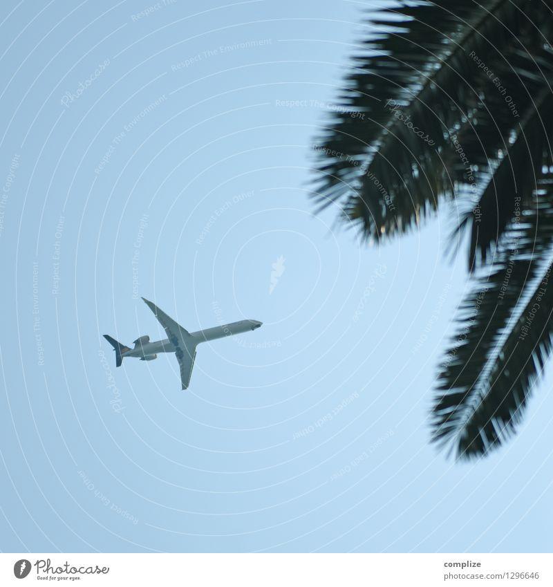 Reiseziel Ferien & Urlaub & Reisen Tourismus Ferne Freiheit Sommer Sommerurlaub Sonne Strand Meer Pflanze exotisch Palme Verkehr Luftverkehr Flugzeug