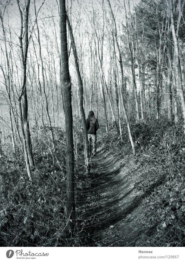 Triebtäter Baum Blatt Wald grau Wege & Pfade laufen Typ Fußweg Geäst verfolgen