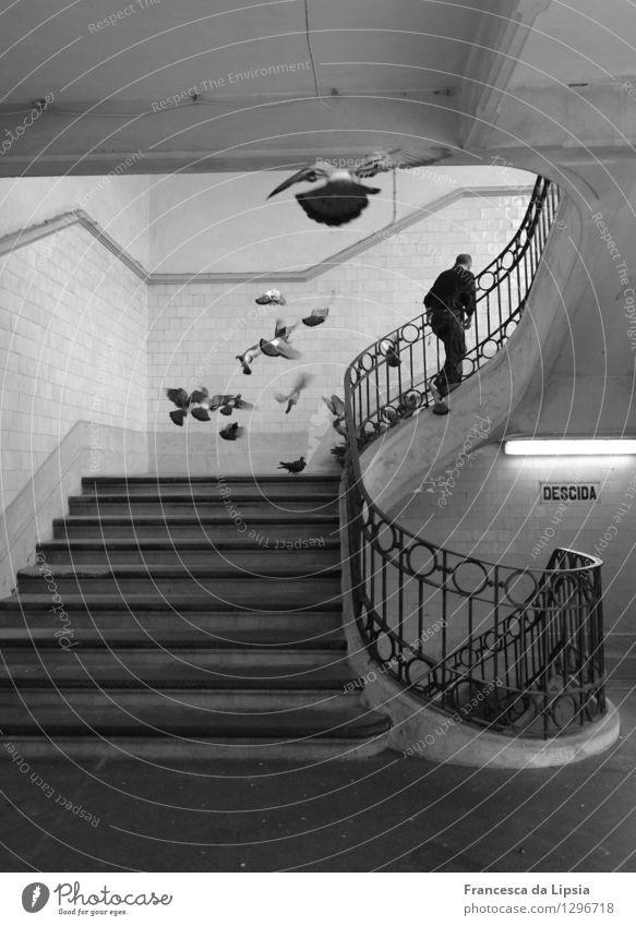 Tauben füttern Mensch Stadt weiß Ferne schwarz Architektur Bewegung grau fliegen gehen Zufriedenheit wild Treppe authentisch frei Tanzen
