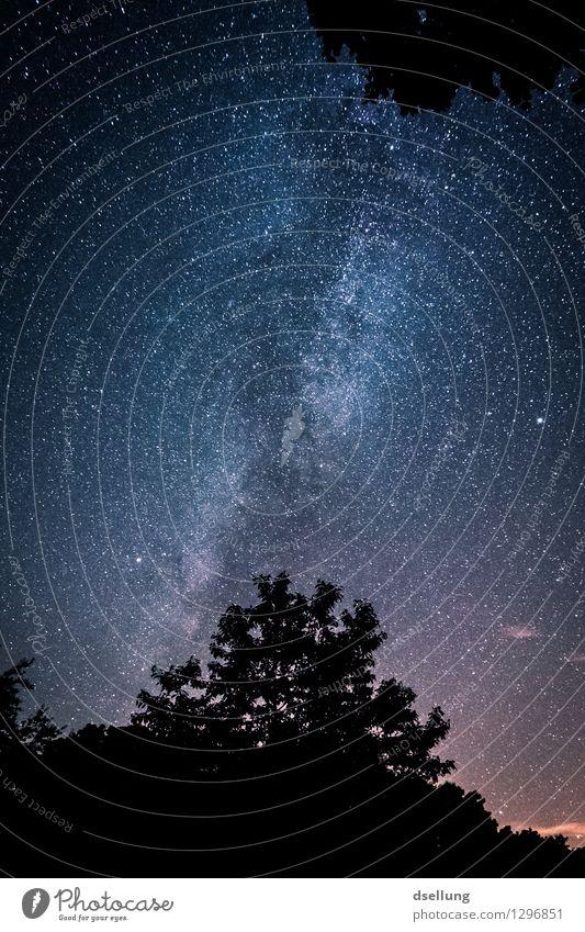 Sternenhimmel im Wald - Nationalpark Eifel Natur Landschaft Himmel Wolkenloser Himmel Nachthimmel Sommer Schönes Wetter alt ästhetisch außergewöhnlich dunkel