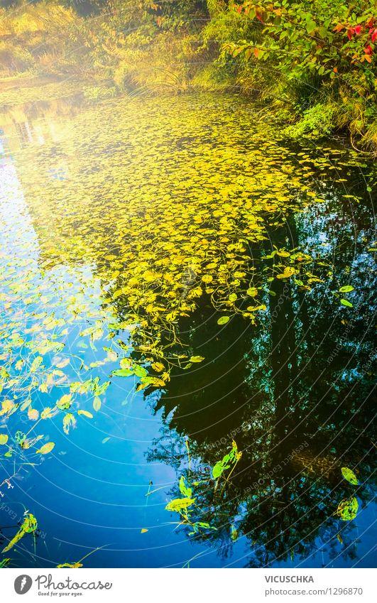 Teichwasser mit Herbstlaub Design wandern Garten Natur Landschaft Pflanze Wasser Schönes Wetter Park Wald See Bach gelb Hintergrundbild Blatt mehrfarbig