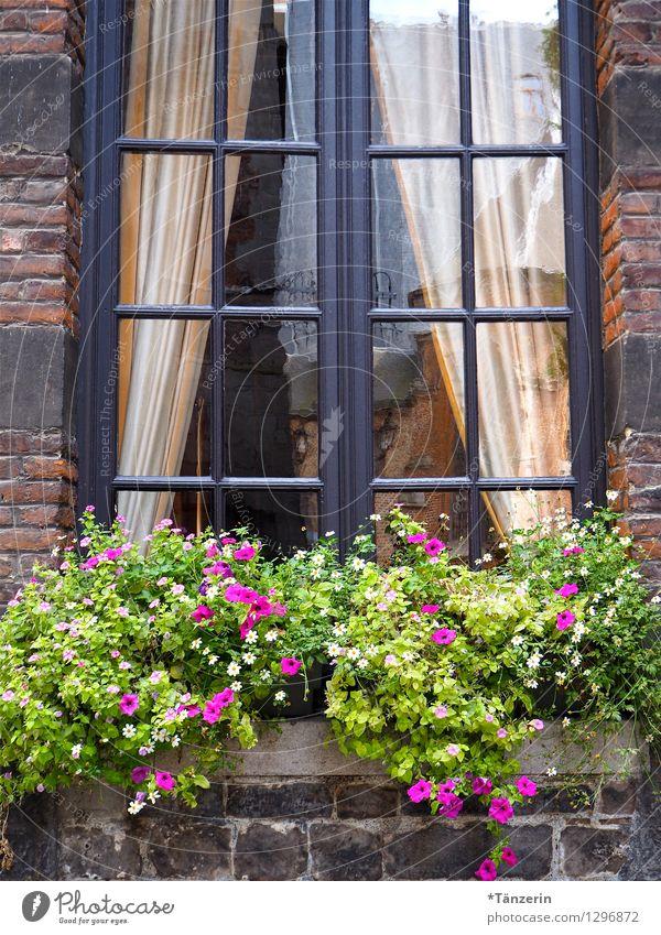begrünt Natur Pflanze Sommer Haus Fenster Wärme natürlich Gebäude Glück Zufriedenheit Tourismus Dekoration & Verzierung frisch Fröhlichkeit Schönes Wetter Romantik