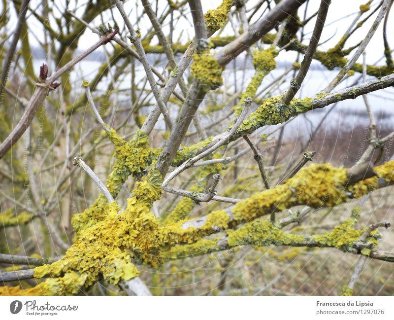Xanthoria parietina Garten Pflanze Winter Sträucher Flechten Feld Seeufer Holz Netzwerk atmen leuchten tragen Wachstum authentisch dunkel Ekel klein nah viele