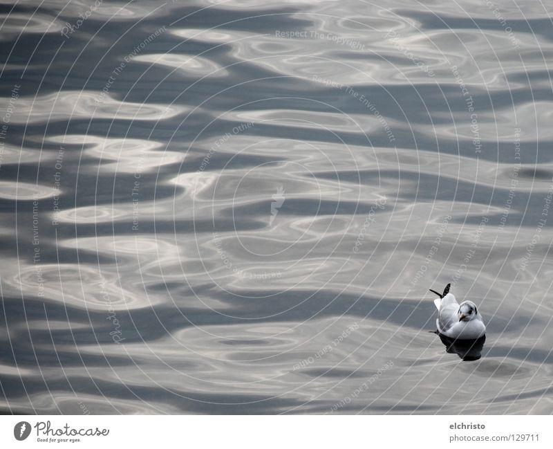 Treibend... Wasser weiß Meer ruhig schwarz Erholung grau träumen See Vogel Wellen Pause Gelassenheit Möwe Bodensee Wasseroberfläche