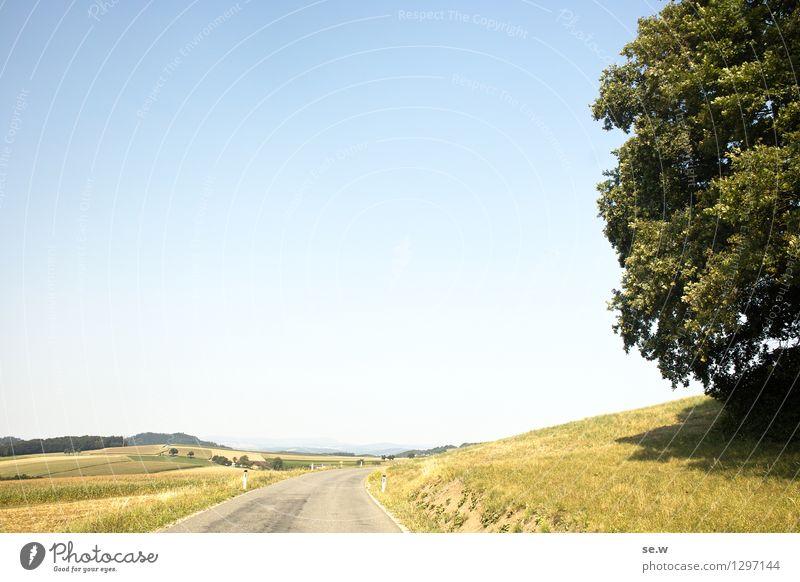 Der Baum Umwelt Wolkenloser Himmel Sonne Sommer Schönes Wetter Feld Hügel Verkehrswege Straße blau gelb grün leuchtende Farben Farbfoto Außenaufnahme