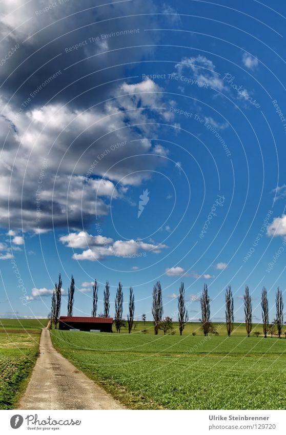 Pappelreihe mit Feldweg im Frühling Farbfoto Außenaufnahme Menschenleer Natur Landschaft Himmel Wolken Wetter Schönes Wetter Baum Gras Wiese Linie gehen frisch