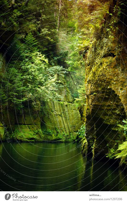 die edmundsklamm Natur grün Baum Erholung Landschaft Felsen leuchten Ausflug Fluss harmonisch Bach Elbsandsteingebirge Naturliebe Sächsische Schweiz Tschechien