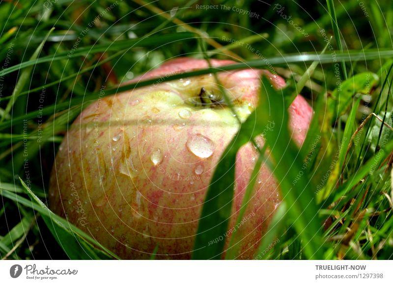 Grasapfel Lebensmittel Frucht Apfel Ernährung Bioprodukte Vegetarische Ernährung Natur Erde Wassertropfen Herbst Wiese ästhetisch einfach Fröhlichkeit frisch