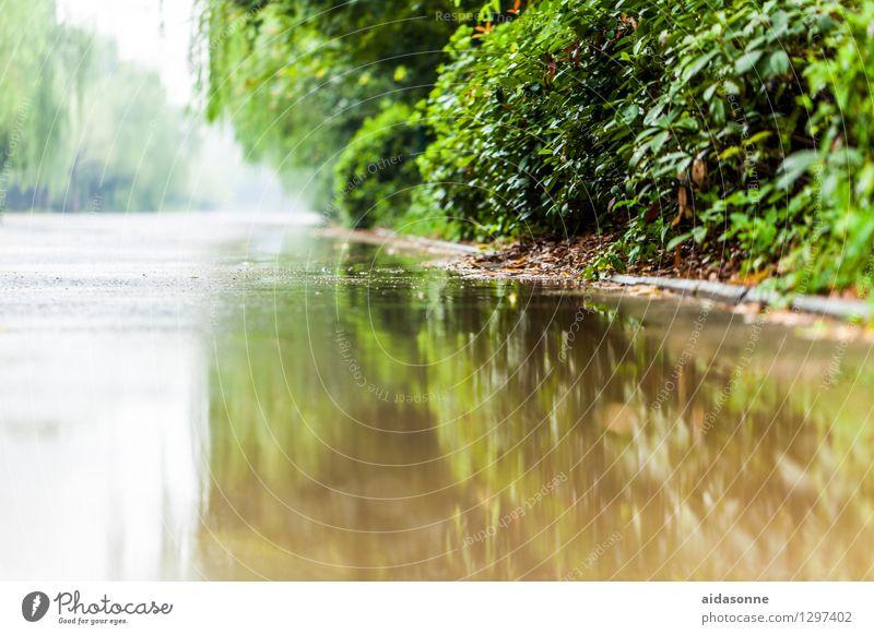 nasse Strasse Stadt Menschenleer Verkehrswege Straße Pfütze geheimnisvoll Natur Umwelt Reflexion & Spiegelung Wasserspiegelung Farbfoto Tag