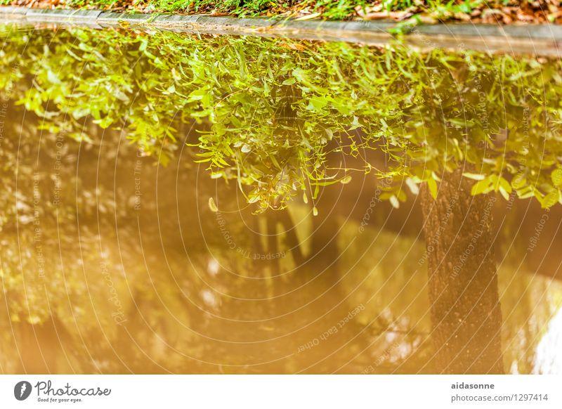 Pfütze Sommer Wetter Teich Erholung geheimnisvoll Umwelt Wasser Reflexion & Spiegelung Küste See China Pflanze Spiegelbild Farbfoto Außenaufnahme Menschenleer