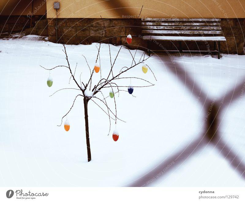 Ostern in Weiß Natur weiß Baum Freude Winter ruhig Haus kalt Schnee Frühling Garten Feste & Feiern Wetter Suche Bank