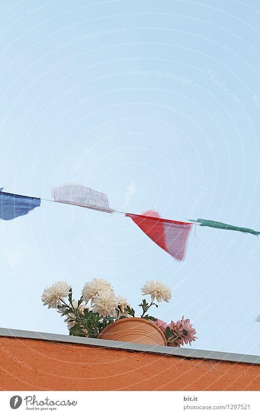 0815 AST |..blumig-leicht II Ferien & Urlaub & Reisen Tourismus Ferne Natur Himmel Wolkenloser Himmel Frühling Sommer Pflanze Blume Topfpflanze Blühend