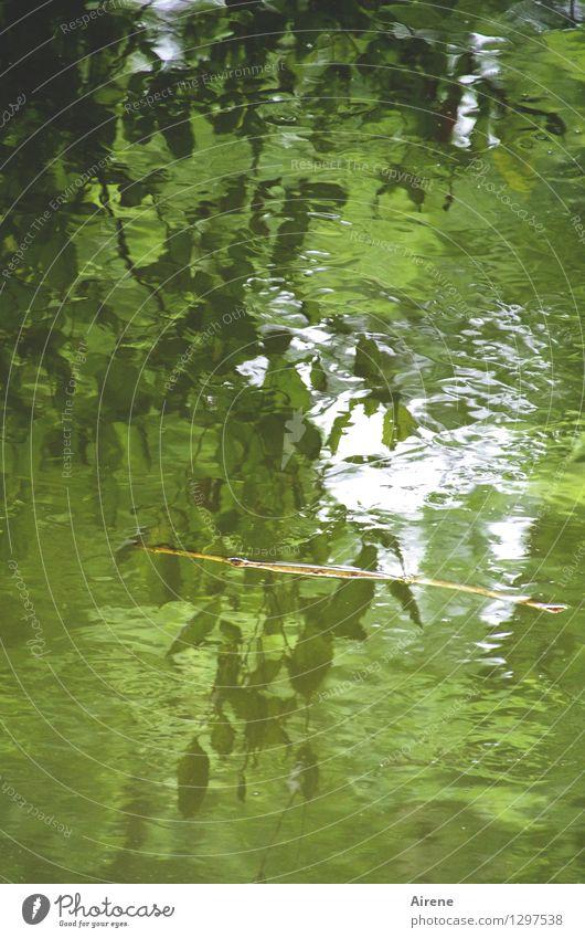 0815 AST | sich treiben lassen Wasser Pflanze Baum Blatt Grünpflanze Wald Urwald Flussufer Auwald Schwimmen & Baden kalt grün Geborgenheit Verschwiegenheit