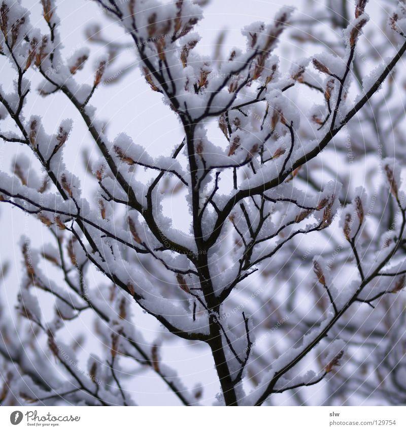 Winterlich Baum Winter Einsamkeit Schnee grau Eis Ast