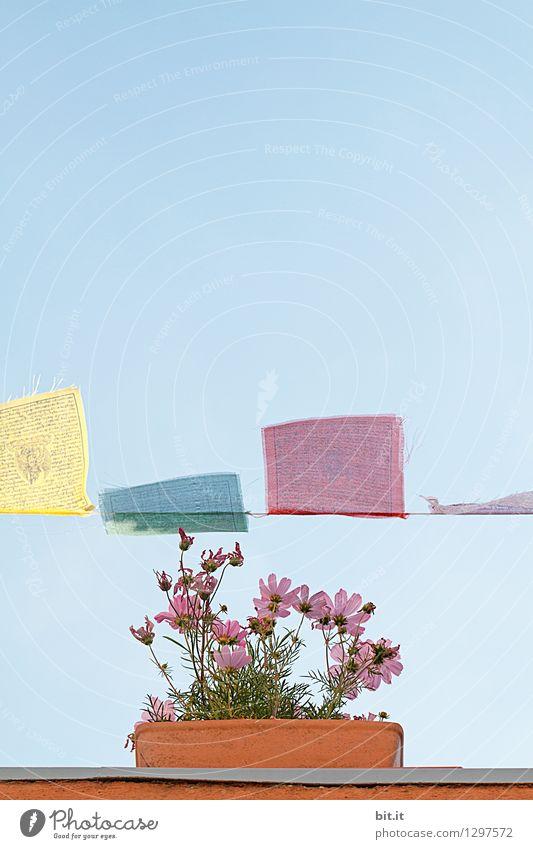 0815 AST |..blumig-leicht Sinnesorgane ruhig Meditation Häusliches Leben Garten Dekoration & Verzierung Muttertag Gartenarbeit Natur Frühling Sommer Pflanze