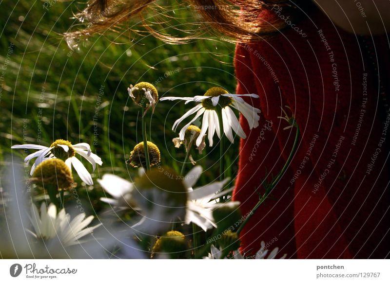 . Frau Mensch Natur schön rot Pflanze Blume Erwachsene Herbst feminin Wiese Leben Landschaft Gefühle Haare & Frisuren Glück