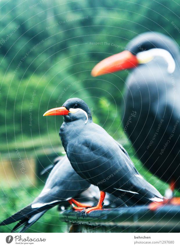 aus der reihe tänzer Natur schön Erholung Tier Wiese außergewöhnlich Garten Vogel orange Park elegant Wildtier sitzen Feder Tierfuß warten