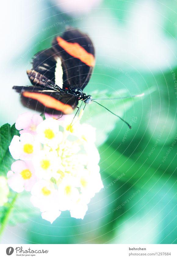 postbote Natur Pflanze schön Blume Erholung Blatt Tier Blüte Wiese klein Garten außergewöhnlich fliegen Park elegant Wildtier