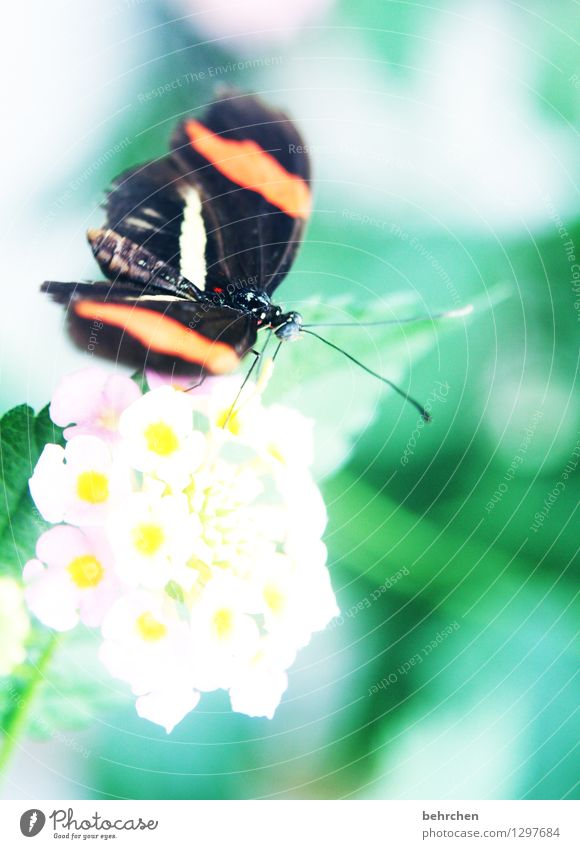 postbote Natur Pflanze Tier Blume Blatt Blüte Garten Park Wiese Wildtier Schmetterling Tiergesicht Flügel Fühler 1 beobachten Blühend Duft Erholung fliegen