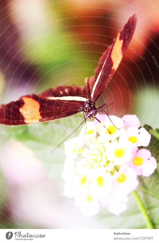 feinschmecker Natur Pflanze Tier Blume Blatt Blüte Garten Park Wiese Wildtier Schmetterling Tiergesicht Flügel Facettenauge Rüssel Beine Fühler 1 beobachten