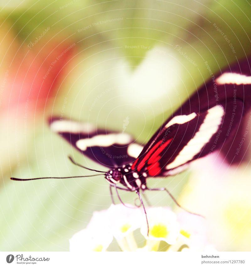 da ist ein herz für euch Natur Pflanze schön Sommer Erholung Blume Blatt Tier Blüte Frühling Wiese Garten außergewöhnlich Beine fliegen Park