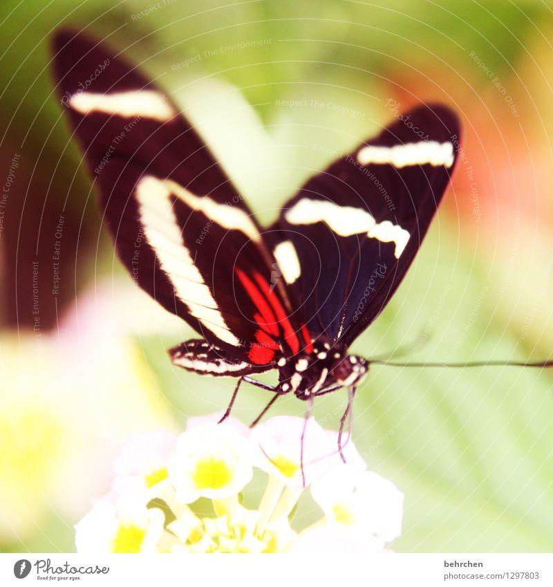 2016...nicht ohne meine schmetterviecher;) Natur Pflanze schön Sommer Blume Erholung Blatt Tier Blüte Frühling Wiese Garten außergewöhnlich fliegen Park