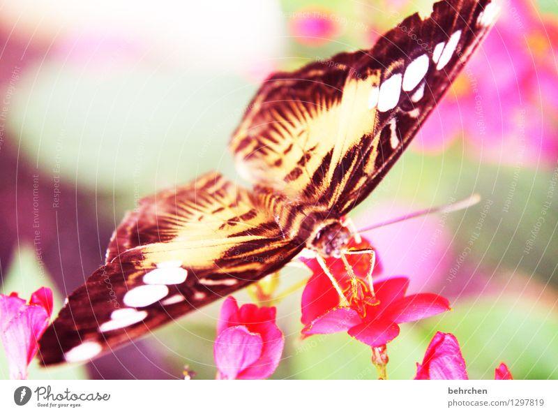 farbbombe Natur Pflanze Tier Frühling Sommer Schönes Wetter Blume Blatt Blüte Garten Park Wiese Wildtier Schmetterling Flügel Blühend Duft fliegen Fressen