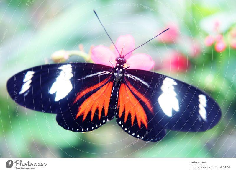 leuchten Natur Pflanze Tier Frühling Sommer Schönes Wetter Blume Blatt Blüte Garten Park Wiese Wildtier Schmetterling Flügel 1 Erholung fliegen Fressen sitzen