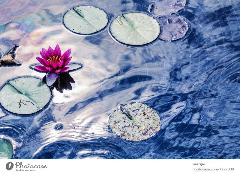 Von Monet inspiriert: Seerose Wellness Erholung Natur Wasser Wassertropfen Himmel Sonne Sonnenlicht Sommer Schönes Wetter Pflanze Blume Rose Seerosen