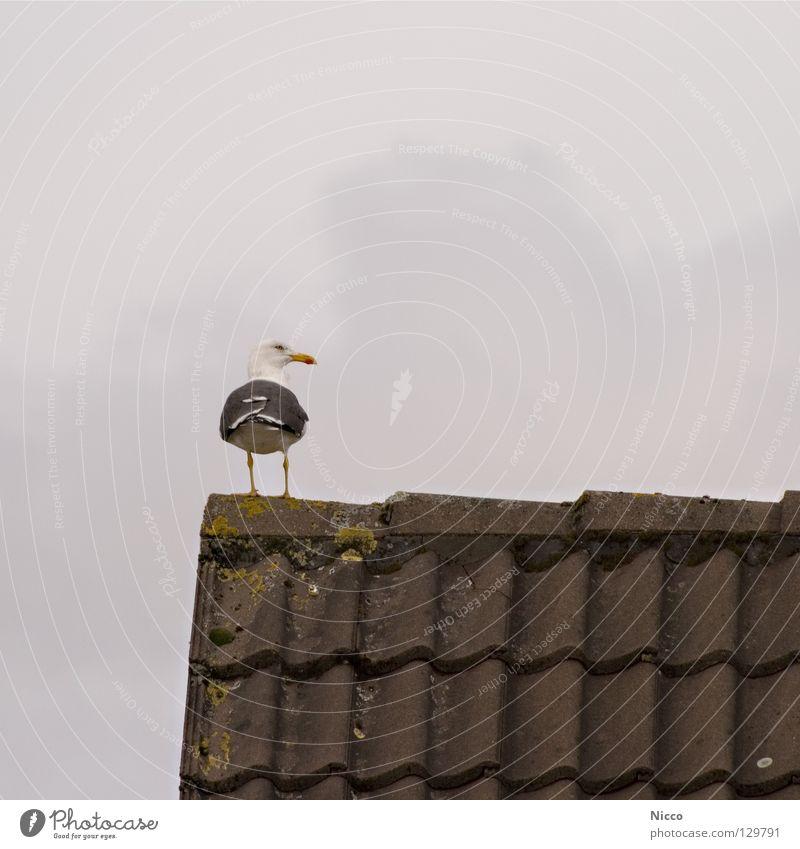 Möw Möw Blick genießen Vogel Schnabel See Meer Ferien & Urlaub & Reisen Dach trüb Regen schlechtes Wetter Dachziegel Wolken Haus Dachgiebel Quadrat Ferne