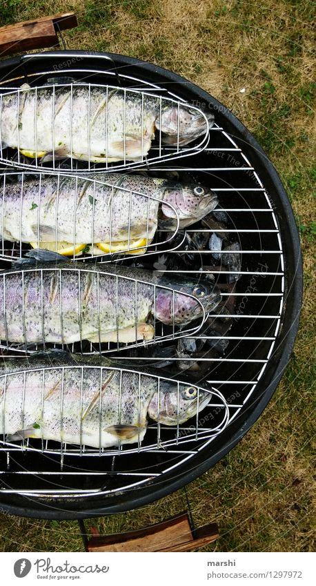 Regenbogenforellen Fisch Ernährung Essen Abendessen Tier 4 Stimmung Forelle Grillen Angeln Sommer geschmackvoll lecker Fischauge genießen Garten Farbfoto