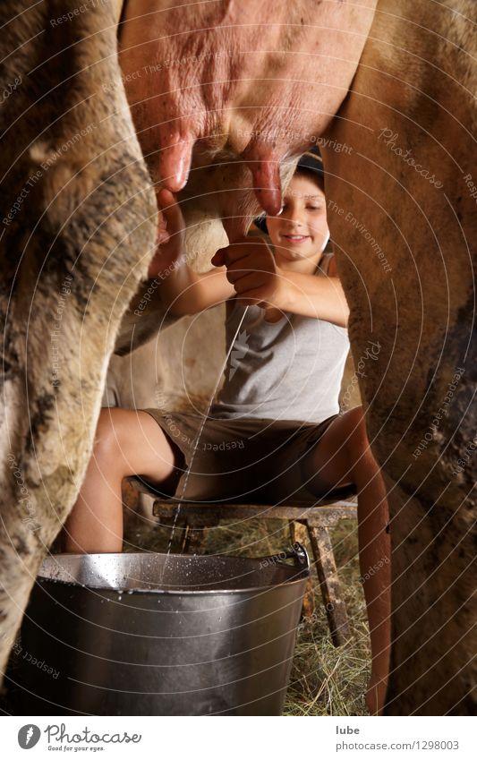 Frischmilch Mensch Kind Tier Junge Arbeit & Erwerbstätigkeit Kindheit Landwirtschaft 8-13 Jahre Bauernhof Haustier Kuh Forstwirtschaft Käse Milch Erfrischungsgetränk Nutztier