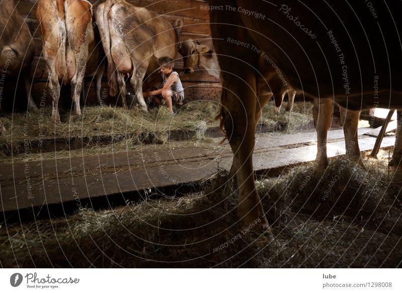 Stallarbeit Milcherzeugnisse Landwirtschaft Forstwirtschaft Junge 1 Mensch 8-13 Jahre Kind Kindheit Haustier Kuh Arbeit & Erwerbstätigkeit Bauernhof bauer
