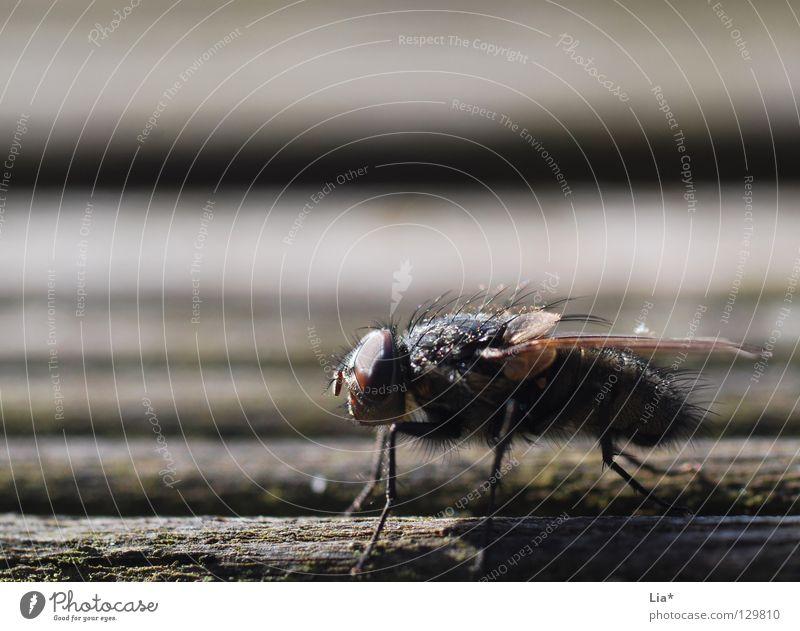 Zwischenlandung klein warten Fliege sitzen fliegen Luftverkehr Streifen nah Flügel Insekt Tiefenschärfe Biologie krabbeln Brennpunkt Stechmücke Plage