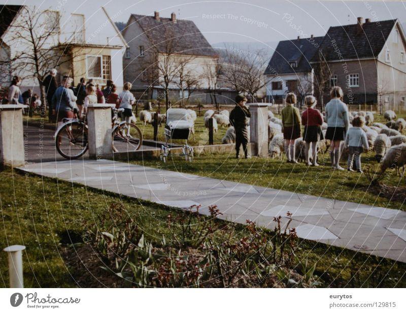 1963 Sechziger Jahre Siebziger Jahre old-school Kind Schaf Wiese Haus Wohngebiet Bürgersteig grün Weide Rasen