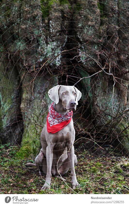 Portrait..... Hund Baum Tier wandern sitzen ästhetisch einzigartig Freundlichkeit Neugier Schutz Sicherheit Baumstamm Vertrauen Konzentration Wachsamkeit