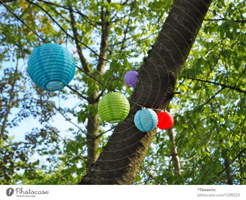 Gartenparty Natur schön Sommer Baum Erholung Freude natürlich Feste & Feiern Garten Party Dekoration & Verzierung Fröhlichkeit genießen Lebensfreude Schönes Wetter