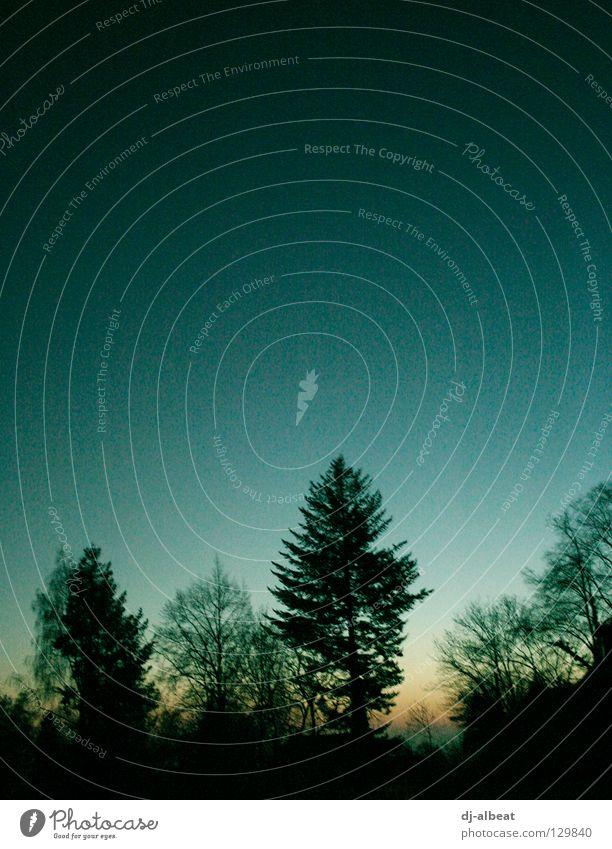 in the morning… Natur Himmel Baum Sonne blau schwarz Gefühle Freiheit Wärme Landschaft hell Beginn Hoffnung Neuanfang Hoffnungsfunke