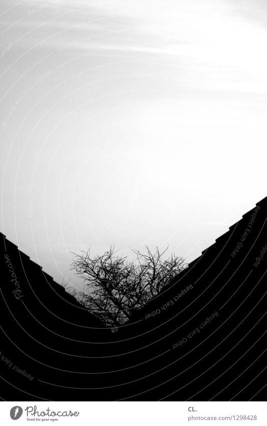 v Himmel Natur Stadt Baum Haus dunkel Umwelt Wachstum Dach