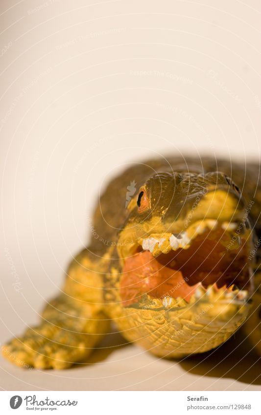 Schnappi Krokodil Dinosaurier Monster Reptil Aquarium Dieb Leder Tier Spielzeug Fressen Makroaufnahme Aligator Gebiss Maul Appetit & Hunger Ernährung