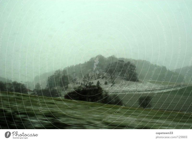 Schneenebel weiß Baum grün Winter Wiese Bewegung Landschaft Nebel
