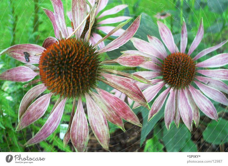 Lila Blume Natur Blume violett