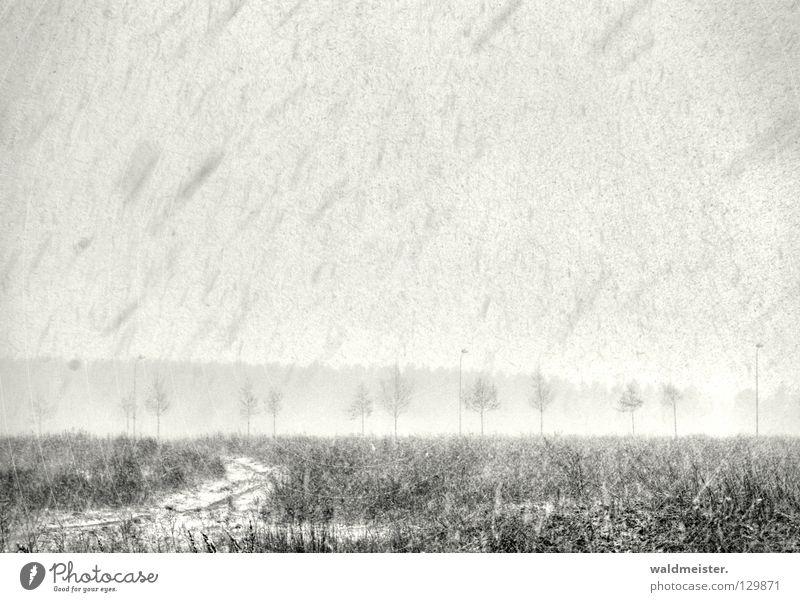 Aprilwetter Winter Schneefall kalt Sturm Schneesturm Schneeflocke Baum grau trist Wintereinbruch Landschaft Schwarzweißfoto