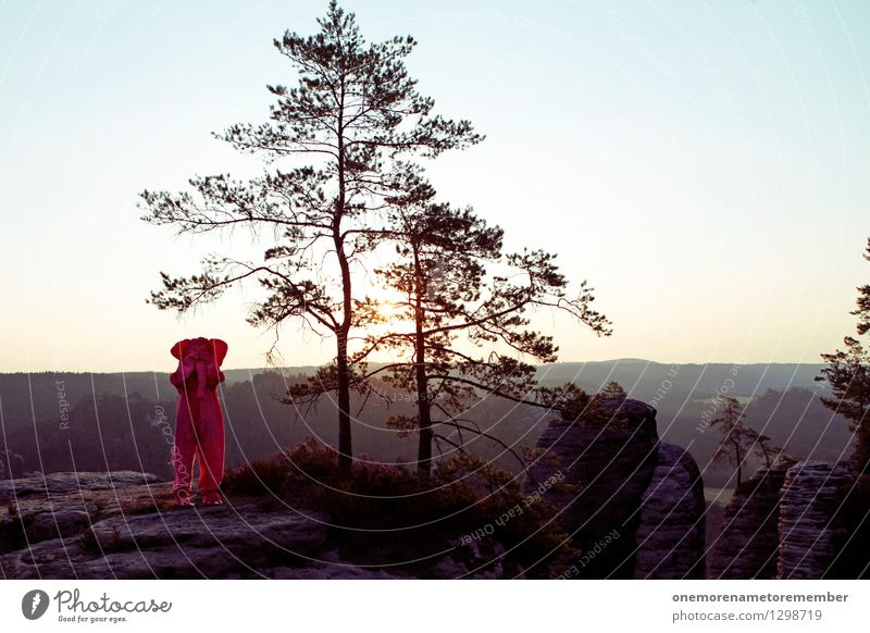 Ich seh nix... Kunst Kunstwerk Abenteuer ästhetisch verstecken Schüchternheit Elefant Karnevalskostüm rosa Eyecatcher Felsen Sächsische Schweiz Freude spaßig
