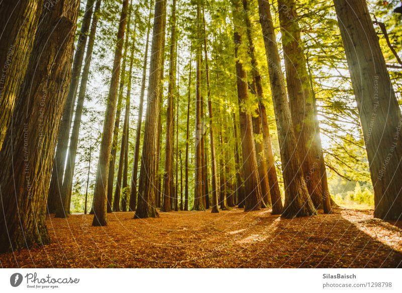 Natur Ferien & Urlaub & Reisen Pflanze schön Sommer Sonne Baum Landschaft Wald Berge u. Gebirge Umwelt Park Tourismus Wachstum wandern Schönes Wetter