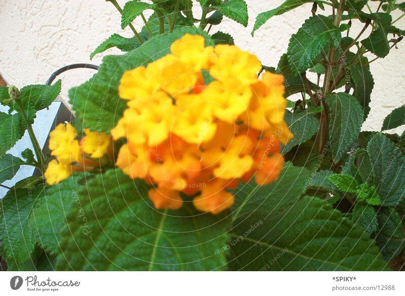 Blümchen Natur Blume