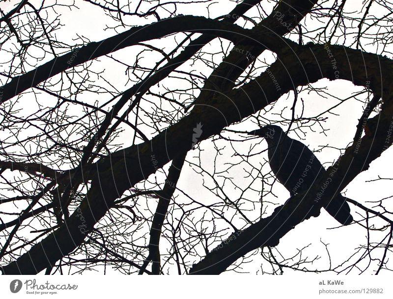 Black and White Vs. Crow Rabenvögel Baum Winter schlechtes Wetter Schwarzweißfoto Vogel Ast Black & White