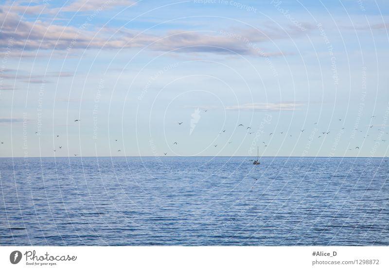 Fischerboot kehrt von fang zurück Himmel Natur blau Meer Umwelt Vogel Möwe Erwartung Fischereiwirtschaft Schwarm maritim himmelblau Heimweh Möwenvögel