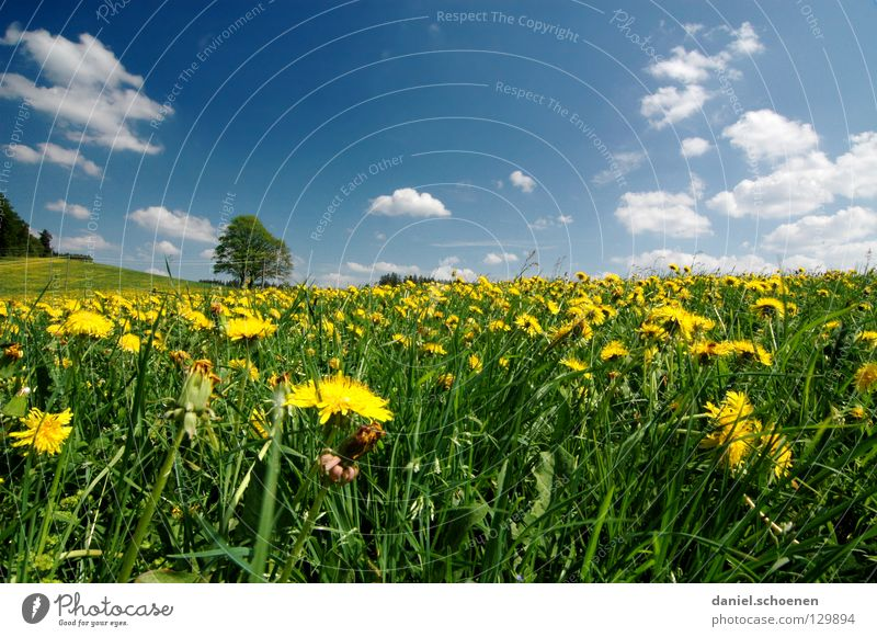 Sommerwiese Himmel Baum Blume grün blau Sommer Ferien & Urlaub & Reisen gelb Wiese Blüte Gras Frühling Perspektive Rasen Pause Freizeit & Hobby
